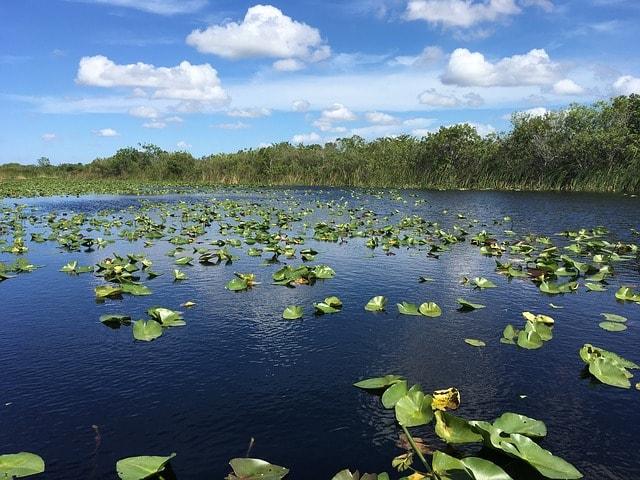 Los mejores parques nacionales de Estados Unidos. Everglades